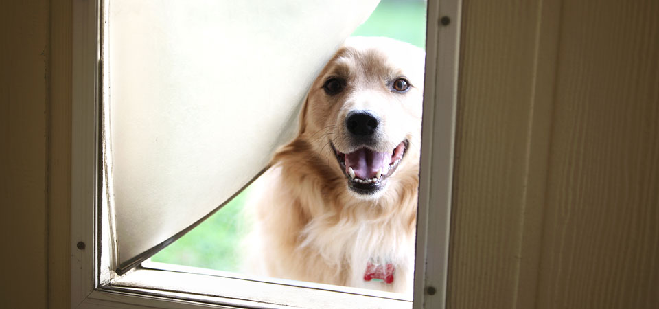Dog looking through pet door